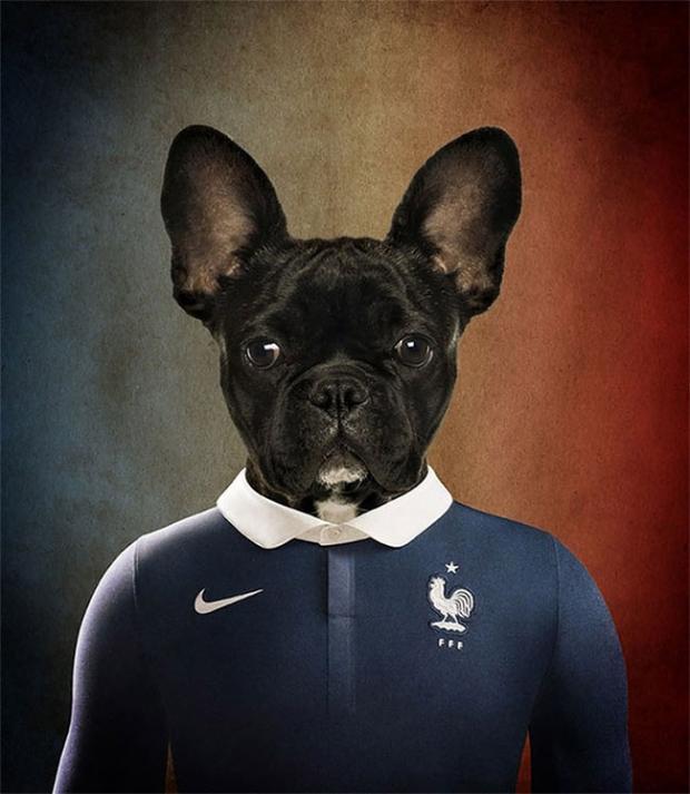 bulldog-francese