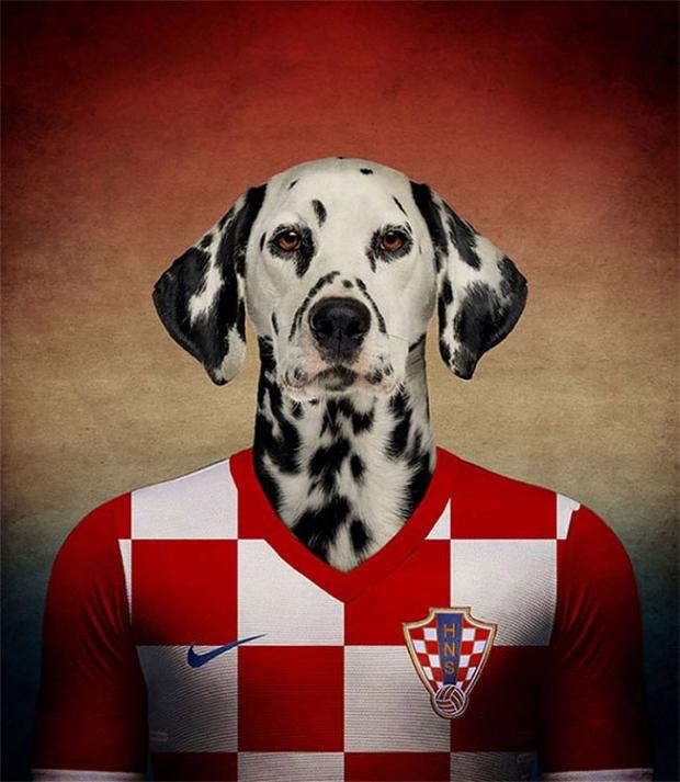 dalmata-croazia
