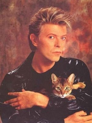 gatto-david-bowie