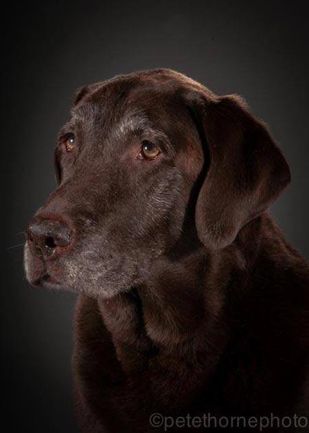 cane-nero-vecchio