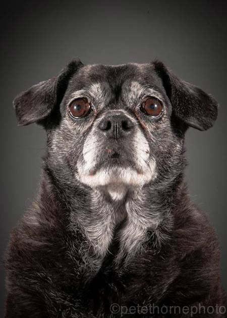 cane-vecchio-4