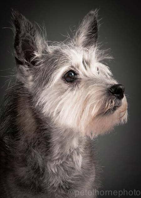 cane-vecchio2