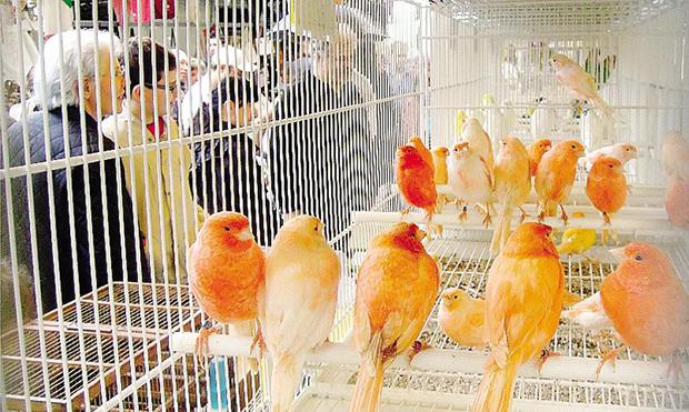 torna-la-fiera-degli-uccellimontorfano-attesi-in-migliaia_ca118726-ca2b-11e3-adb0-1b741817cd1b_display