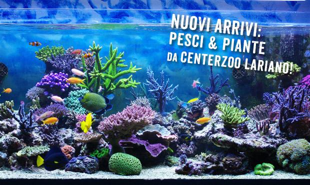 CENTERZOO-reparto-acquariofilia