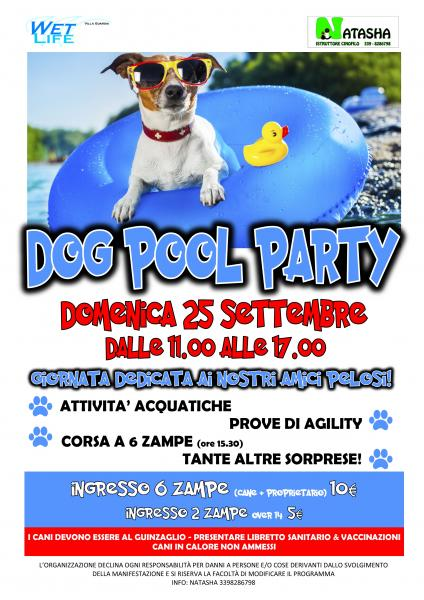 dog_pool_party