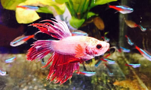 pesci-centerzoo