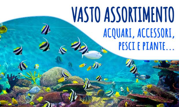 post-acquari