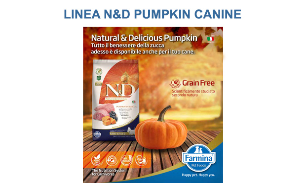 nd-pumpking-canine