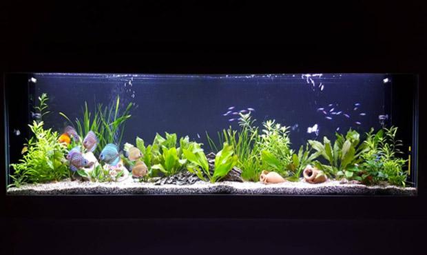 acquario-centerzoo-lariano-finito