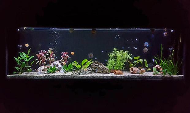 acquario-centerzoo-lariano