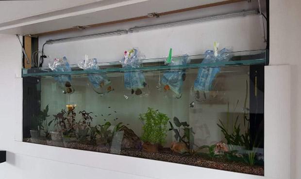 acquario-centerzoo-lariano2