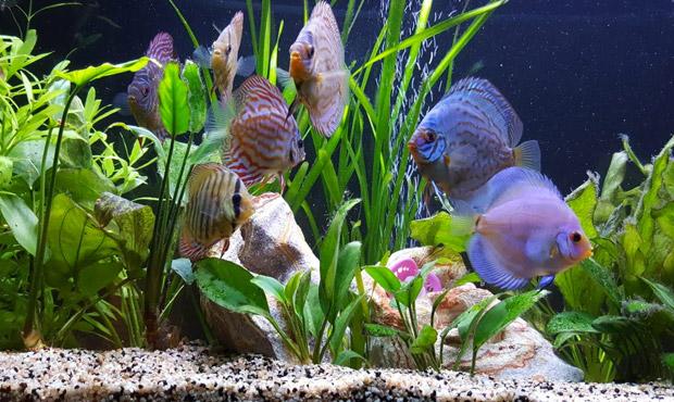 pesci-acquario-centerzoo-lariano