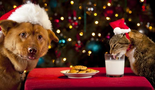 centerzoo-prodotti-natalizi-cani-gatti