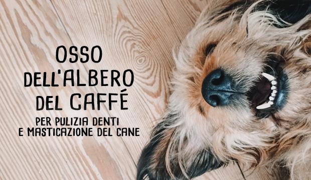 osso-albero-caffe-centerzoo-lariano