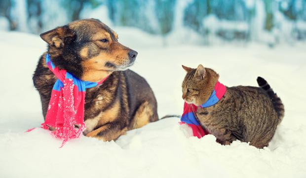 sos-freddo-cani-gatti