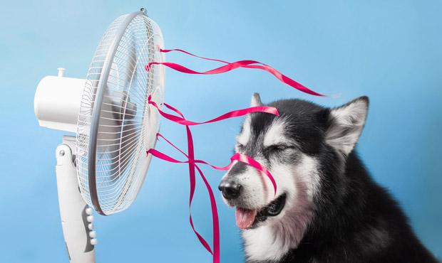 colpo-calore-cane-estate