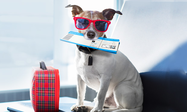 passaporto-cani-gatti-vacanza