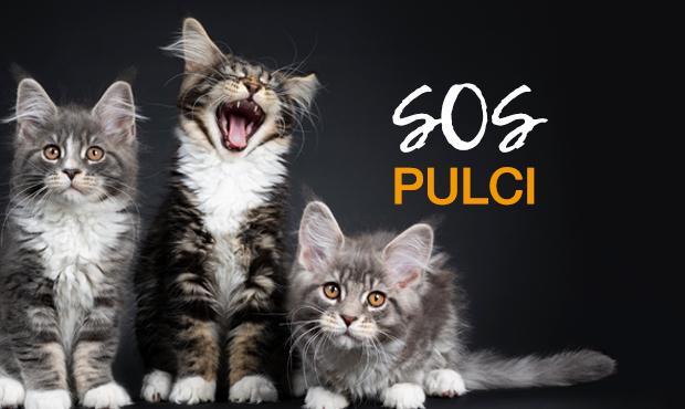 sos-pulci-gatti