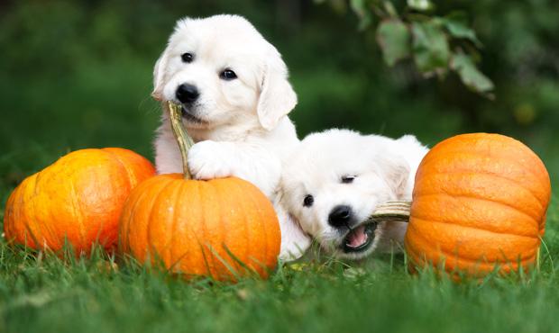 zucca-alimentazione-cani