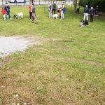 nuova-area-cani-montorfano